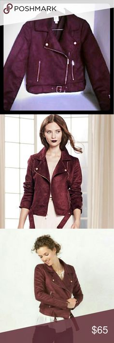 "Lauren Conrad Runway Collection Suede Moto Jacket NWT. Rose gold metal accents add a romantic touch Asymmetrical zipper front. Long sleeves with zippered cuffs.Lined.2-pocket. Coordinating belt  MEASUREMENTS (flat in inches)?  Length?(from shoulder to hem): ?22""Chest (flat/ pit to pit): ?19""Waist: 17""Sleeve Length (from pit to hem): 19"" Polyester.Dry clean Lauren Conrad  Jackets & Coats"