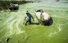 The scale of China's rise as an economic power is unprecedented, but so is it's pollution. Here are 25 Shocking Pictures Of The Pollution In China Water Pollution, China, Dead Fish, Les Religions, Reportage Photo, Pictures Of The Week, Mother Earth, Climate Change, Lakes
