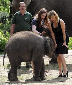 """""""Trunk and disorderly; Elephant upskirt"""" - Pixdaus -- She looks a bit alarmed!"""