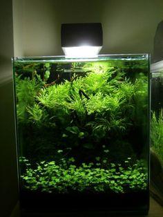 Potential aquarium decorations Take the Challenge Aquarium Aquascape, Planted Aquarium, Aquascaping, Aquarium Terrarium, Nature Aquarium, Saltwater Aquarium, Aquarium Fish Tank, Freshwater Aquarium, Aquarium Landscape
