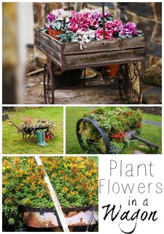 Wagons can be such a fun and inexpensive way to display flowers in your garden. They are also a creative option if you don't have much yard space.