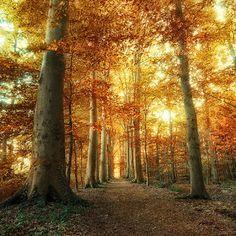 Leaderkin Gifts: Wonderful trees and leafs #nature #leaf #leaderkin...