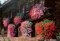 Ivy geraniums are everywhere in Germany/Austria Pink Garden, Garden Art, Ivy Geraniums, House Columns, Rectangular Pool, Italian Garden, Style Finder, Terrace Garden, Garden Landscaping