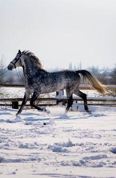 Attitude, Champs, Nature, Horses, Portrait, Snow, City, Winter, Animaux