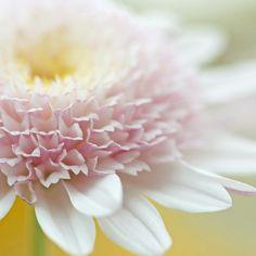 花卉189