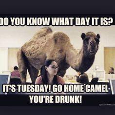 Happy Tuesday!!'  #happytuesday #humor #WhatDayItIs #YoureDrunk #GoHome…
