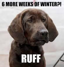 That IS ruff! #DogMom #DogDad #AdoptDontShop #DogLover #LoveDogs #RescueDog #ShelterDog