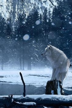 Beautiful.... I really enjoy the magic a wolf creates when it is caught in a photo.