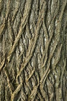 Close up view of a tree trunk with an interesting criss-cross pattern to the bark. Photo by Julianna Olah on Mostphotos. Tree Patterns, Patterns In Nature, Textures Patterns, Natural Forms, Natural Texture, Wood Bark, In Natura, Tree Bark, Tree Tree
