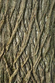 Tree Bark Texture - By Julianna Olah