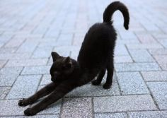 Immagine di cat, black, and animal