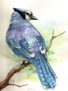 Bluejay - video tutorial by testdrive watercolor bird, watercolor animals, watercolor pictures, drawing Watercolor Pictures, Watercolor Bird, Watercolor Animals, Watercolor Paintings, Watercolors, Bird Paintings, Blue Jay, Bird Drawings, Drawing Birds