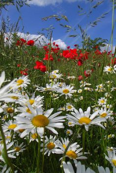 All Nature, Flowers Nature, Amazing Nature, Amazing Flowers, White Flowers, Beautiful Flowers, Spring Scenery, Virtual Flowers, Wild Flower Meadow