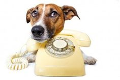 10 toll-free numbers to keep handy for your pet