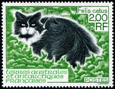 Domestic cat (Felis catus) | postage stamp, French Southern and Antarctic…