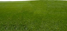 grass png - Google Search