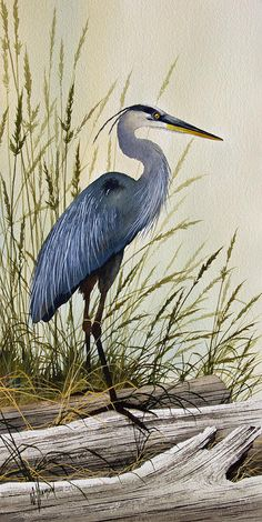 Great Blue Heron Splendor Painting  - Great Blue Heron Splendor Fine Art Print. Background.