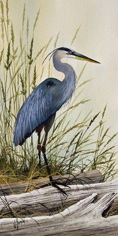 Great Blue Heron Splendor Painting - Great Blue Heron Splendor Fine Art Print. Background.