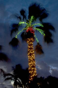 Christmas in Florida....this was how I decorated my palm tree from the first year I bought the house until I sold it.  I miss my house. I miss my friends I had there too.