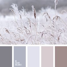 color palettes - color schemes - color