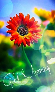 Good Morning Flowers Pictures, Good Morning Friends Images, Good Morning Image Quotes, Good Morning Beautiful Images, Good Morning Picture, Good Morning Good Night, Morning Pictures, Morning Quotes, Morning Messages