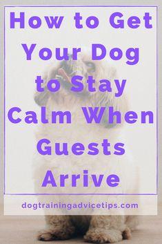 Dog Health Tips, Puppies Tips, Dog Care Tips, Dog Boarding, Dog Training Tips, Pet Dogs, Doggies, Dog Leash, Beautiful Dogs