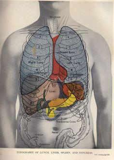 Scientific Illustration | glensidehospital:   Glenside Hospital Museum...