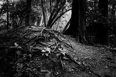 Terra  fértil | Medo, a resposta à percepção do perigo, frequente quando nos cruzamos ou estamos com desconhecidos em sítios isolados, sem possibilidade de pedir socorro