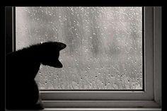 【Rain】雨の動物画像:ハムスター速報