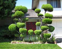 in baumschulen werden auch viele zierb ume gepflanzt garten pinterest pflanzen baumschule. Black Bedroom Furniture Sets. Home Design Ideas
