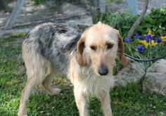 La timida Susie cerca casa! info: adozioni@leudica.org / Shy Susie is looking for a good home!