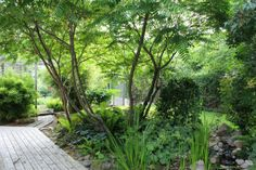 Purple Area: Nytt trädgårdsprojekt