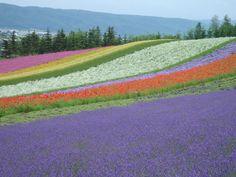 hokkaido wildlife photography | Hokkaido Lavender Tours : Japan Summer Flowers & Nature Tours, Best of ...