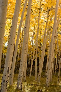Fall in Flagstaff, AZ | See Flagstaff in the Arizona & New Mexico TourBook guide