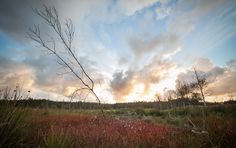 Branch at sunset Denmark, My Photos, Clouds, Explore, Mountains, Sunset, Landscape, Nature, Travel