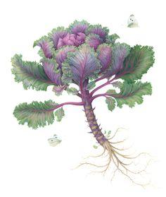 kale plant drawing - Google Search
