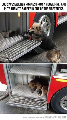 Awwww - dog saves pups from house fire and...