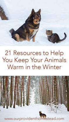 Do you worry about your animals in the winter? Click here to see 21 resources to help you keep your animals warm in the winter. #homesteading #homesteadanimals #farmanimals #animalcare #wintercare via @ourprovidenthom