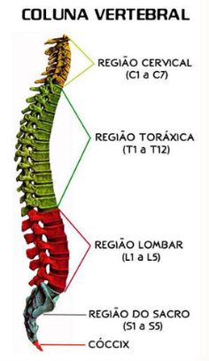 Coluna Vertebral Human Body Anatomy, Muscle Anatomy, Mental Map, Medical Anatomy, Study Planner, Exam Study, Student Studying, Med School, Study Notes