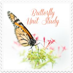 Spring is in full bloom here - just ask my allergies - so it is a perfect time to do a unit on butterflies! Our local zoo has a beautiful butterfly garden exhibit that should be open and make a gre...