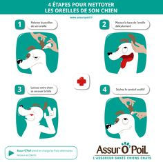 4 étapes pour nettoyer les oreilles de son #chien avec la #mutuelle santé #animaux Assur O'Poil Labrador Husky, Dog Rules, Fox Terrier, Jack Russell Terrier, Yorkshire Terrier, Dog Care, I Love Dogs, Animals Beautiful, Animals And Pets