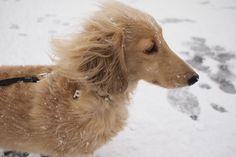 cute dog. A Healthy Dog is a Happy Dog / www.PetWellbeing.org
