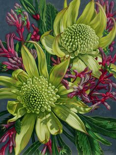 Green Waratahs with Pink Kangaroo Paws by Fiona Craig Botanical Illustration, Botanical Prints, Australian Native Flowers, Australian Art, Kangaroo Paw, Online Art Gallery, All Art, Fine Art America, Art Prints