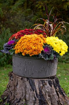 Favorite fall planters from stone, ceramic, plastic planters. I love the idea of also using a galvanized bucket or tub filled with Fall mums, cabbage or pumpkins. Container Flowers, Container Plants, Container Gardening, Vegetable Gardening, Organic Gardening, Pumpkin Planter, Plastic Planters, Fall Mums, Fall Containers