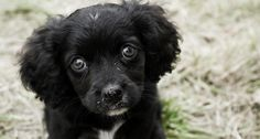 Dogs Trust advises on what you should look for when you are buying a puppy.