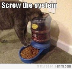haha, Lolcats, funny cat images with humorous captions. … Funny pictures of cats with captions are remarkable things that may let you to instantly hilarious and happy if you're feeling unfortunate. Cats are funny hilarious they Funny Animal Pictures, Funny Animals, Cute Animals, Stupid Animals, Animal Pics, Crazy Cat Lady, Crazy Cats, Bad Cats, I Love Cats