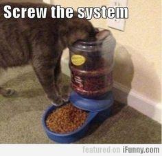Funny Animals #humor#animal#funny