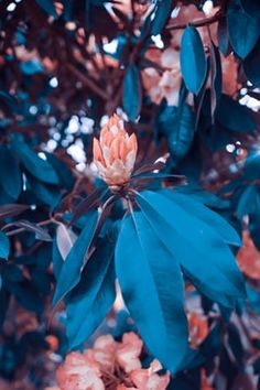 shallow focus photo of orange flowers photo – Free Flower Image on Unsplash Blur Image Background, Desktop Background Pictures, Blur Background Photography, Studio Background Images, Light Background Images, Picsart Background, Editing Background, Focus Photography, Orange Flower Photos