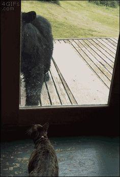 – en fait, j'ai empêché un ourson d'entrer chez moi ; et je le regrette ! –