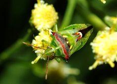Arizona: Beetles, Bugs, Birds and more: Bug eats Bug